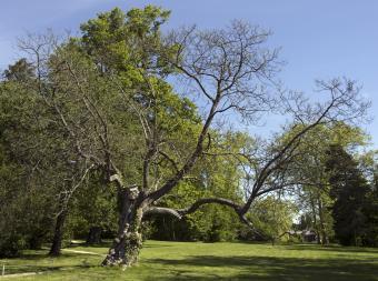Admirable trees